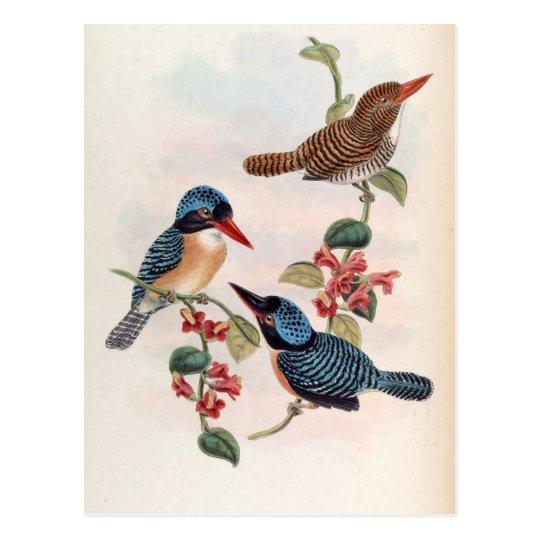 Carcineutes Melanops (Blue-Faced Kingfisher) Postcard