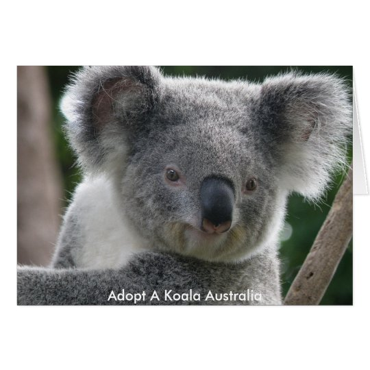 Card Adopt A Koala Australia