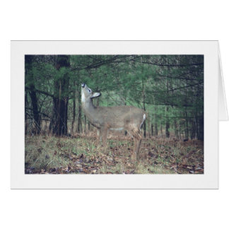 "card, Baby Deer Snacking From Tree in Woods"", phot Greeting Card"