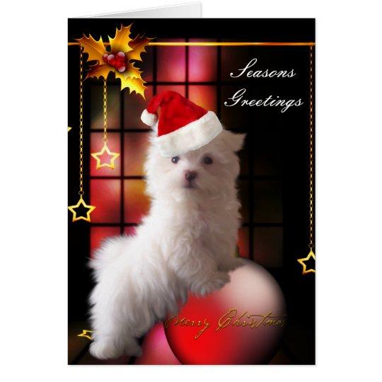 Card Christmas White Maltese Puppy Dog