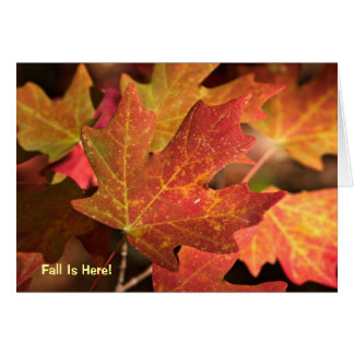 Card: Colours Of Fall (Landscape) Card