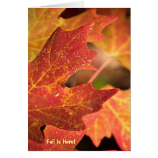 Card: Colours Of Fall (Portrait) Card