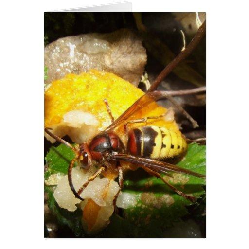 Card De Notas Wasps