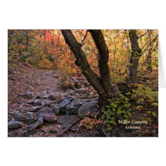 Card: Fall In Miller Canyon #19 Card
