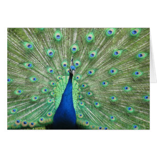 Card - greeting - Peacock tail feathers