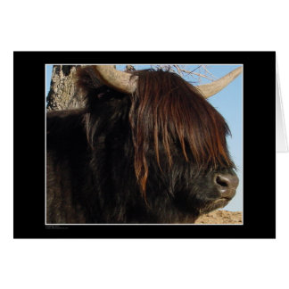 Card - Highland Cattle
