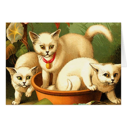Card/ Invitation: Three White Kittens Card