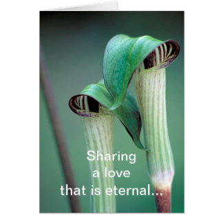 Card /  Jack-in-the-pulpit