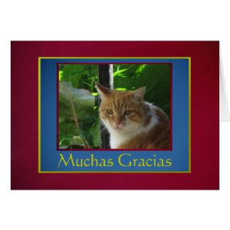 Card: Muchas Gracias - Señor Gato Greeting Card