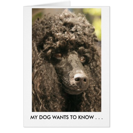 Card, Poodle, MY DOG WANTS TO KNOW .