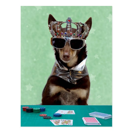 Card Shark King