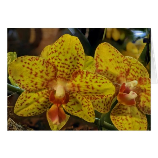 Card Yellow Orchid with NO text