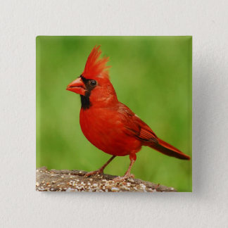 Cardinal 15 Cm Square Badge