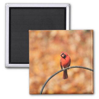 Cardinal 2765 magnet