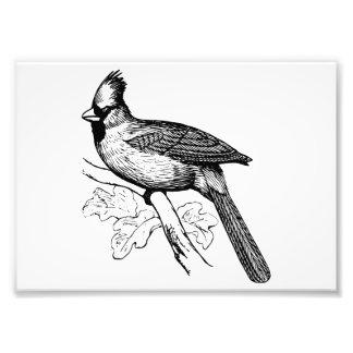 Cardinal Brid Art Photo Print