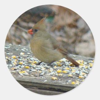 Cardinal (Cardinalis cardinalis) Female Songbird Classic Round Sticker