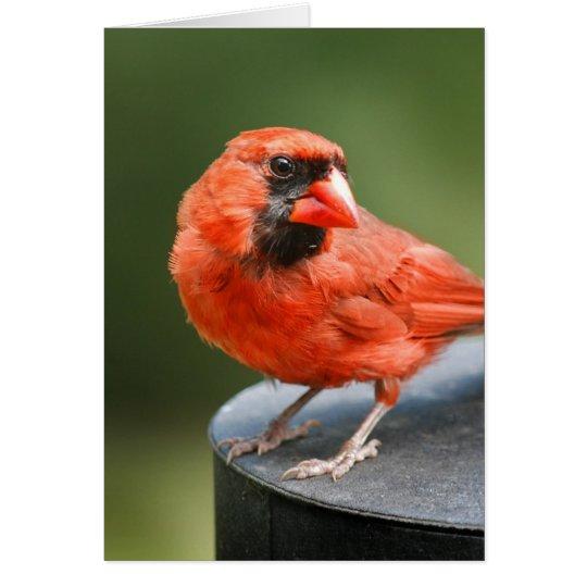 Cardinal Cutie Card
