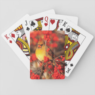 Cardinal female and red berries, IL Poker Deck
