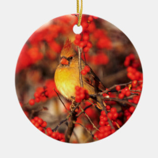 Cardinal female and red berries, IL Round Ceramic Decoration