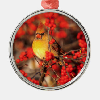 Cardinal female and red berries, IL Silver-Colored Round Decoration
