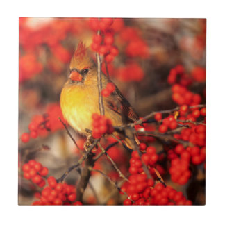 Cardinal female and red berries, IL Small Square Tile