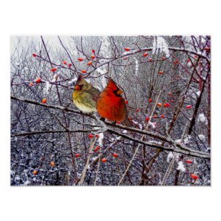 Cardinal Forest Poster