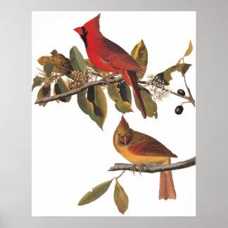 Cardinal Grosbeak Birds in Wild Almond Tree Poster