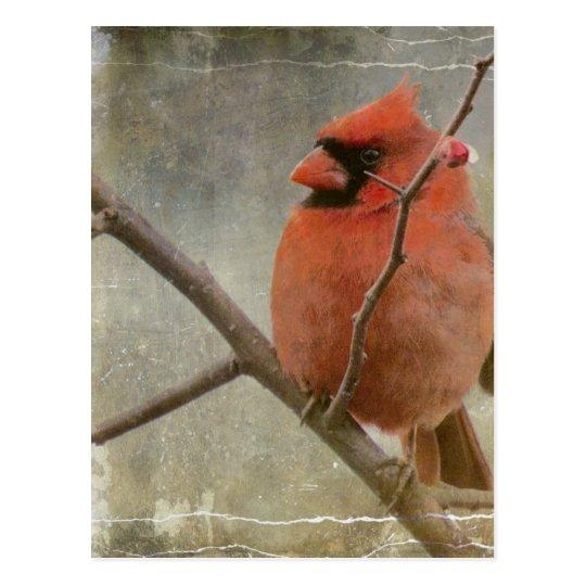 Cardinal Grunge Postcard