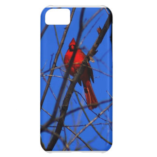 Cardinal In a Tree Cover For iPhone 5C