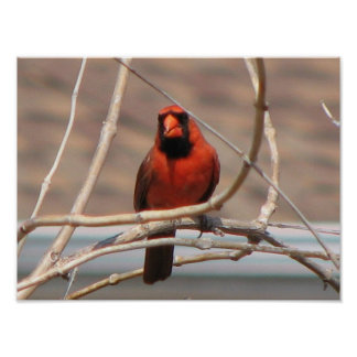 Cardinal in a Tree Print