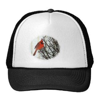 Cardinal in Bush Mesh Hat