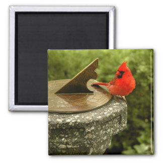 Cardinal in Central Park Magnet