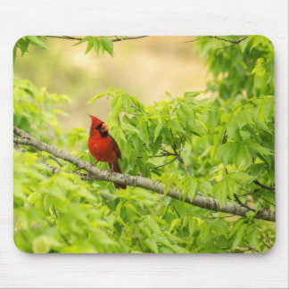 Cardinal in Green Mouse Pad