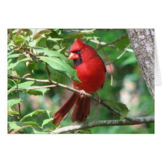 Cardinal in Holly Card