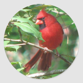 Cardinal in Holly Sticker