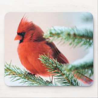 Cardinal in Snow Dusted Fir Mouse Mat