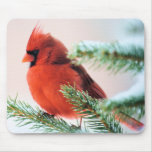 Cardinal in Snow Dusted Fir Mouse Pad