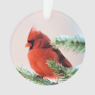 Cardinal in Snow Dusted Fir Tree Ornament