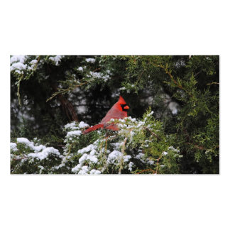 Cardinal in the Snow 1 Pack Of Standard Business Cards