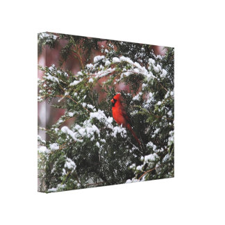 Cardinal in the Snow 2 Gallery Wrapped Canvas