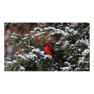Cardinal in the Snow 2 Pack Of Standard Business Cards