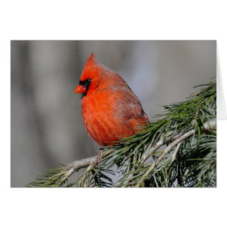 Cardinal in the Snow greeting cards