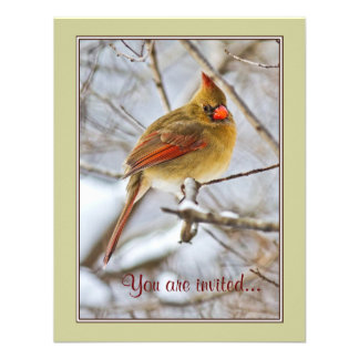Cardinal in the snow - invitation