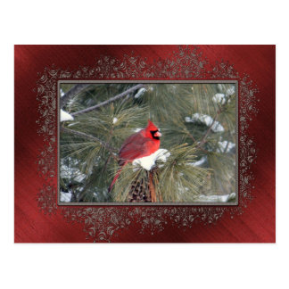Cardinal in the Snow Postcard