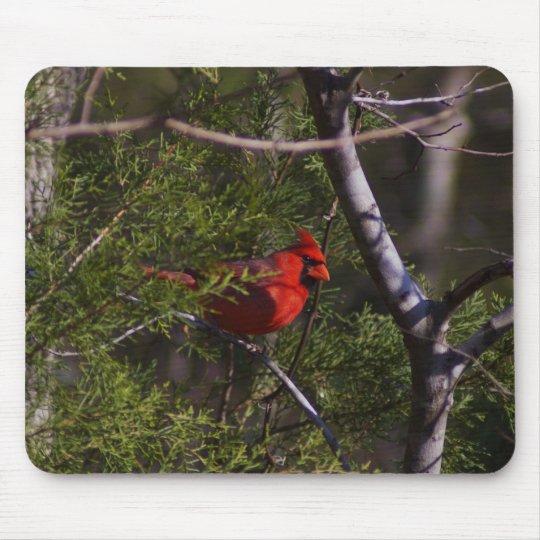 Cardinal in tree mouse mat