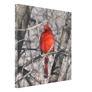Cardinal in Winter Wrapped Canvas Gallery Wrap Canvas
