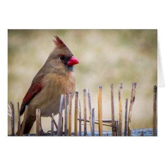Cardinal Note Cards
