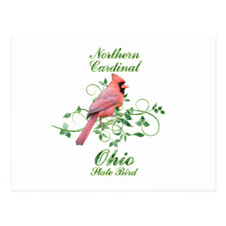 Cardinal Ohio State Bird Postcard