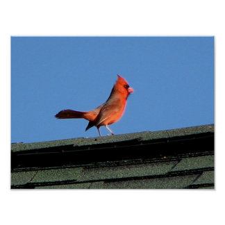 Cardinal on a Roof Posters
