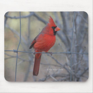 Cardinal on fence - 2009 mouse mat